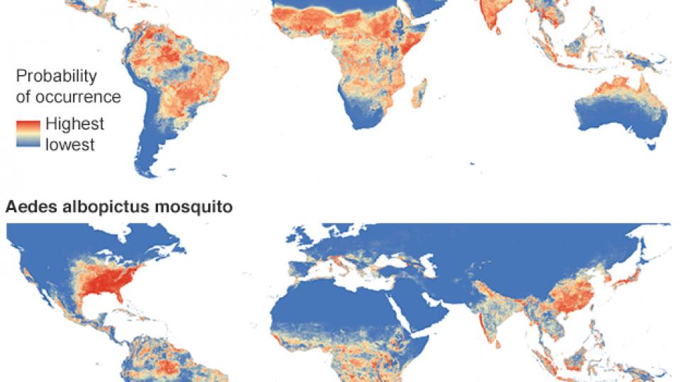 mapa mosquito region